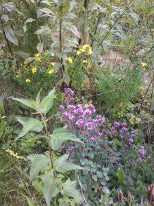 Blumen und Kräuter - auf dem Gelände an jeder Ecke. Den Insekten gefällt es!